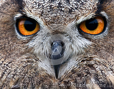 Piercing owl eyes