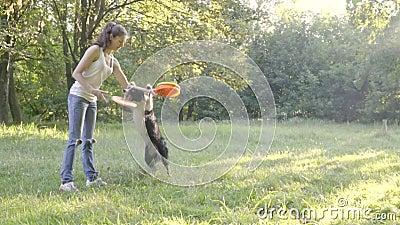 Pies Border collie trzyma frontowymi łapami ręką dziewczyna treser lub rzuca stubarwnego frisbee w, zdjęcie wideo