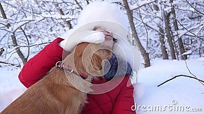 Pies całuje hostessę psie liże twarz dziewczyny Piękna dziewczyna uśmiecha się, pieszczy swojego ukochanego psa zimą w parku dzie zdjęcie wideo