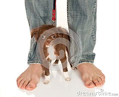 Pies grandes de pequeño perrito