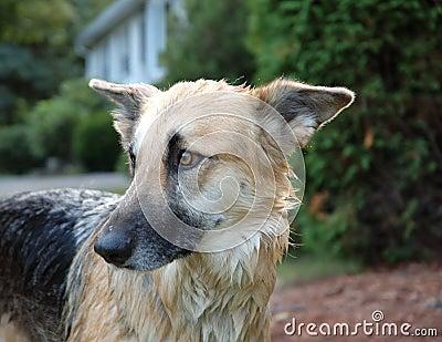 Pies kąpielowy.