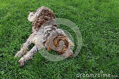 Pies na trawie