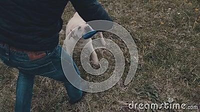 Pies z Frisbee zbiory