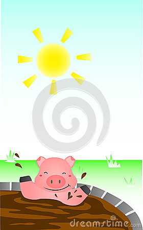 Pig Bathing In The Sun