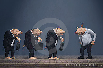 Pig boss and loser team