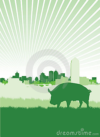 Pig on a meadow