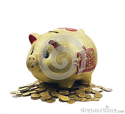Pig - Piggy