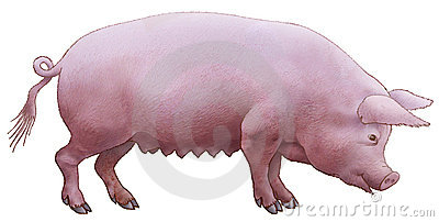Pig pink.