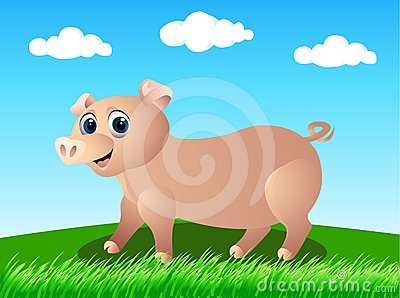Pig in the wild