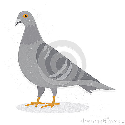 Free Pigeon Stock Images - 36438664