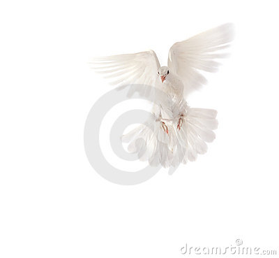 Free Pigeon Royalty Free Stock Photography - 8687277