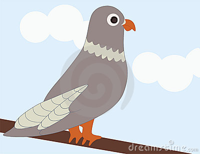A Pigeon on a Branch