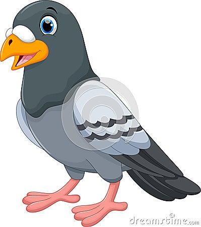 Pigeon Cartoon Isolated On White Background Stock Illustration - Image ...