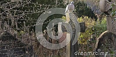 Pigeon on the Cross