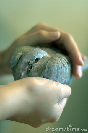 Pigeon in a Girl s Hand