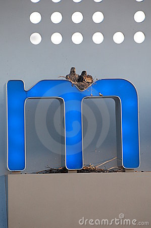 Pigeon nest in letter M