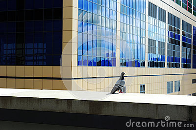 Pigeon standing in city building