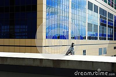 Pigeon standing in city building