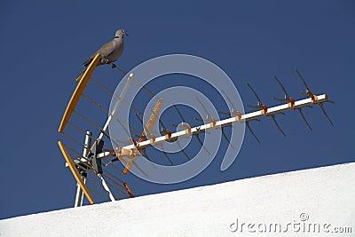 Pigeon on TV Antenna