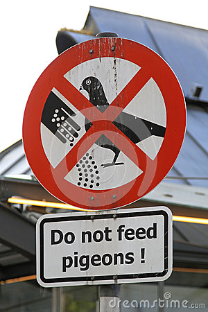 Free Pigeons Feed Royalty Free Stock Photography - 38612437