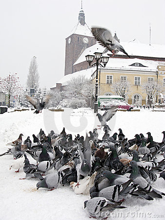 Free Pigeons In Winter City Stock Photos - 7178433