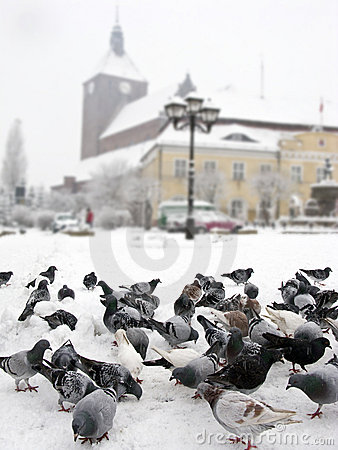 Free Pigeons In Winter City Royalty Free Stock Photo - 7178535