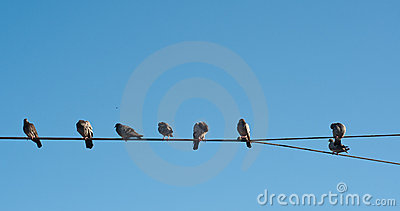 Pigeons in Line