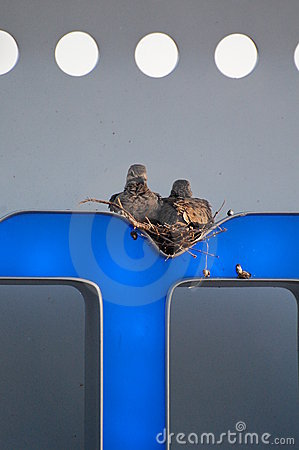 Pigeons Nesting on a Sign