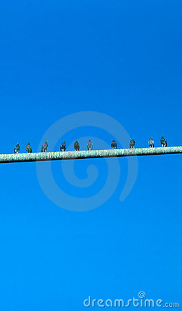Pigeons on Poo Covered Pole