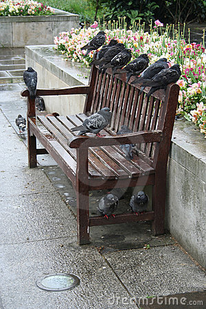 Pigeons roosting on a bench