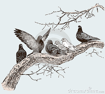 The pigeons on the tree branch in the spring day Vector Illustration