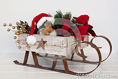 Piggy Santa