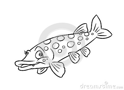 Pike Fish Illustration Coloring