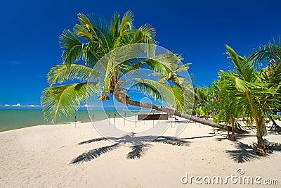 Piękna tropikalna plaża z kokosowym drzewkiem palmowym