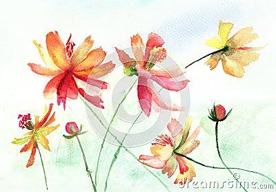 Piękni kwiaty