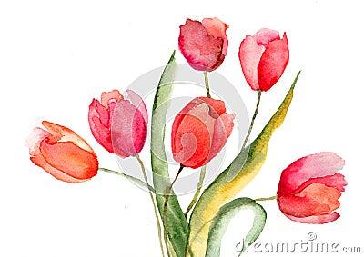 Piękni tulipanów kwiaty