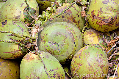 Cocoanut con la cubierta cruda