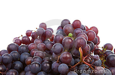 Pile of blue grapes