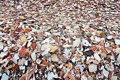 Pile of broken and discarded seashells