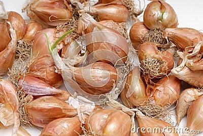 Pile of bulb onions
