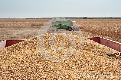 Pile corn