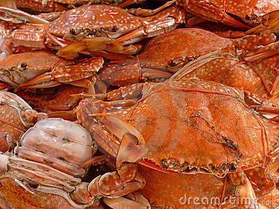 A Pile of Crabs
