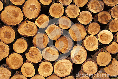 A pile of cut tree trunks