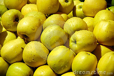 A pile of dewily yellow apples