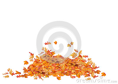 Pile of Fall Leaves Isolated