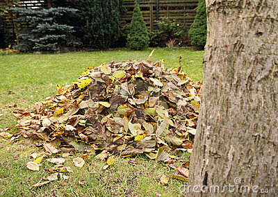 Pile of fallen autumn leaves
