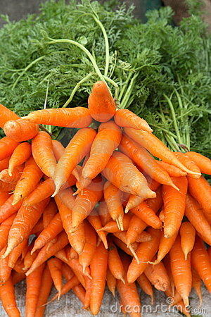 Pile of fresh carrots