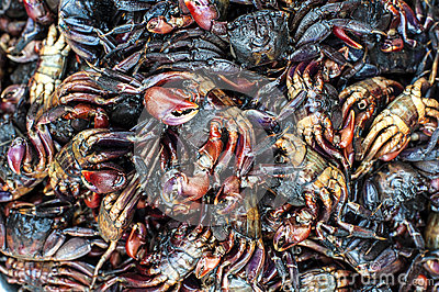 A pile of fresh crab