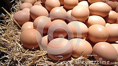 Pile of fresh eggs