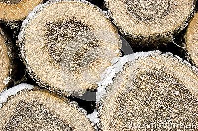 Pile of frozen logs